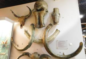 骨、牙などが展示