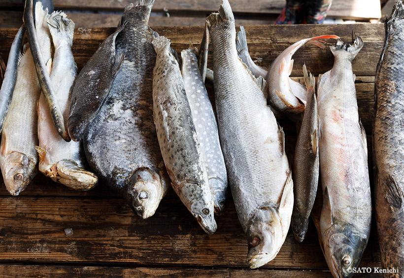 名物の「タラ」は、川魚を生食する料理で、アイヌのルイベとよく似ています。