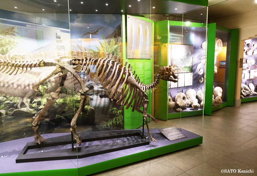 この階には、アンモナイトなどのサハリンの地質学資料や周辺の海洋に生息する動物たちの生態を解説する展示があります