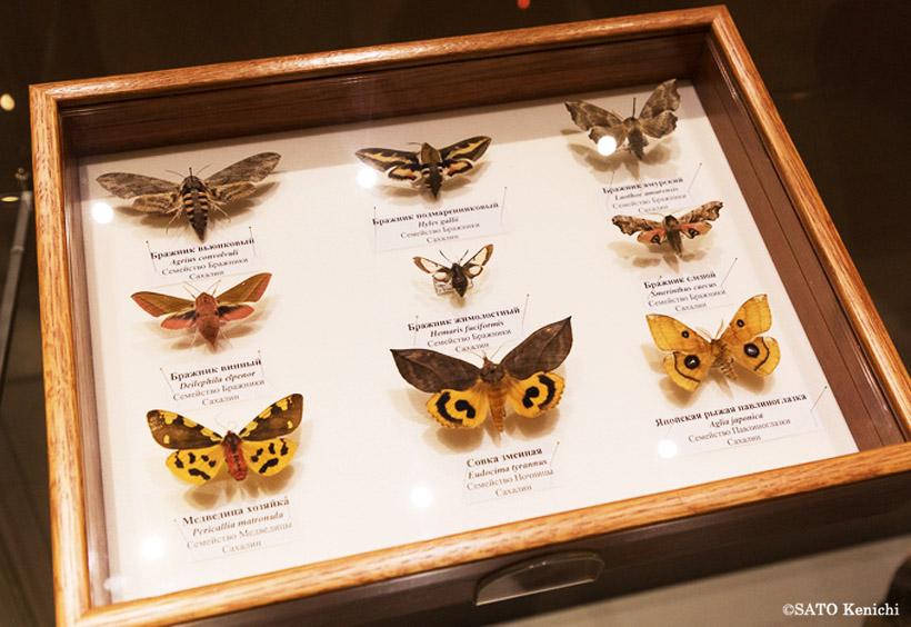 チョウの研究家の朝日純一さんの『原色図鑑 サハリンの蝶』