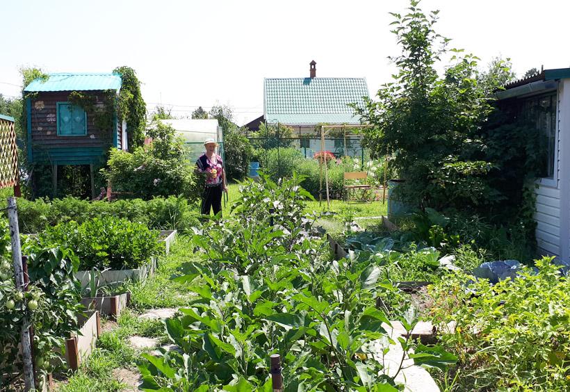 野菜や果物を育てている庭園