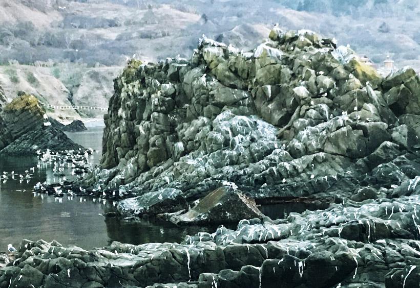 急な崖や岩場の多いという条件は、海鳥の避難所として最適です