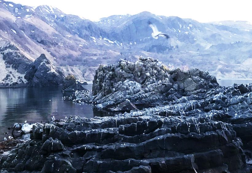 温かい対馬海流のおかげで、島周辺の海域に豊富な海洋生物の棲息をもたらしています