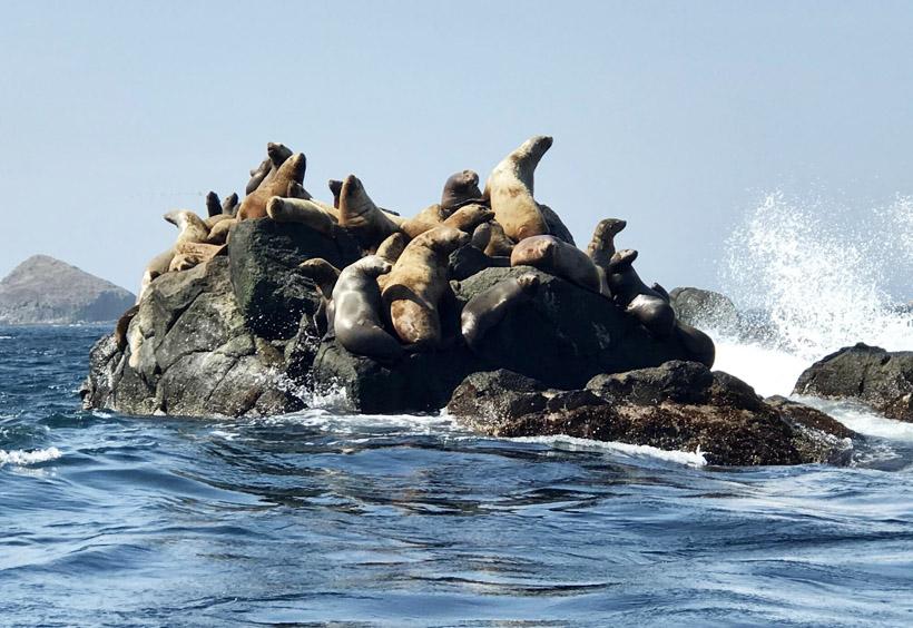 この島はアイヌの住民によって「トドモシリ(アシカの島)」と呼ばれていました